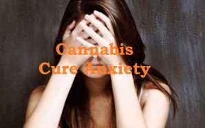 Cannabis Cure Anxiety