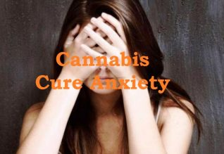 Cannabis Cure Anxiety