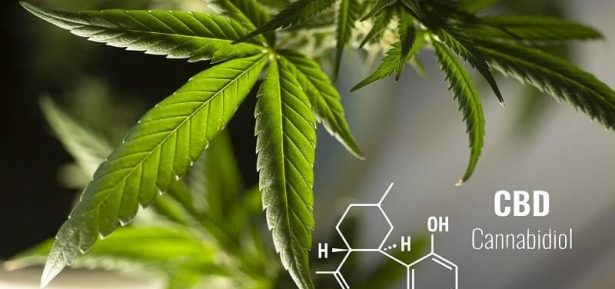 CBD for Pain and Anxiety