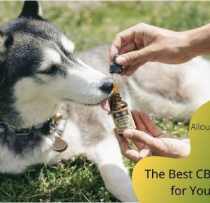 The Best CBD Usages for Your Pet in 2020
