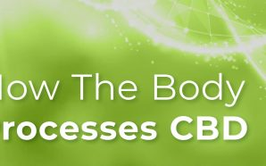 How the Body Processes CBD