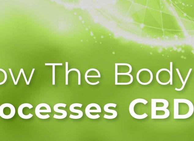 How the Body Processes CBD